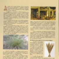 La artesanía de las esteras en Crevillent..pdf